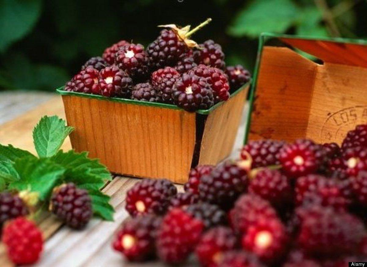 Thu nhập khoảng 200 triệu đồng/năm nhờ trồng cây dâu ta ăn quả